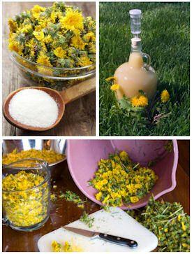 Dandelion Recipes! Wine, Jelly...etc