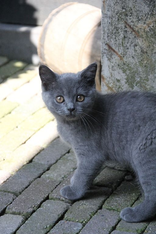 """""""She walks her chosen path by our sides, but our ways are not her ways, and our influence does not remotely touch her."""" --Agnes Repplier. Please check my other kitties boards: http://pinterest.com/aggiedem/has-my-cat-a-soul/, http://pinterest.com/aggiedem/black-cats-are-not-bad-luck/"""