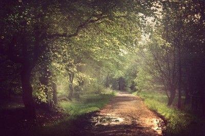 Path of Artemis