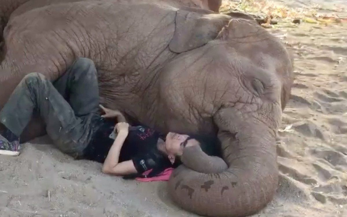 Incredible Woman Snuggles Up With Rescued Elephant to Help Him Feel Safe  (VIDEO) | Elephant, Save the elephants, Elephant nature park