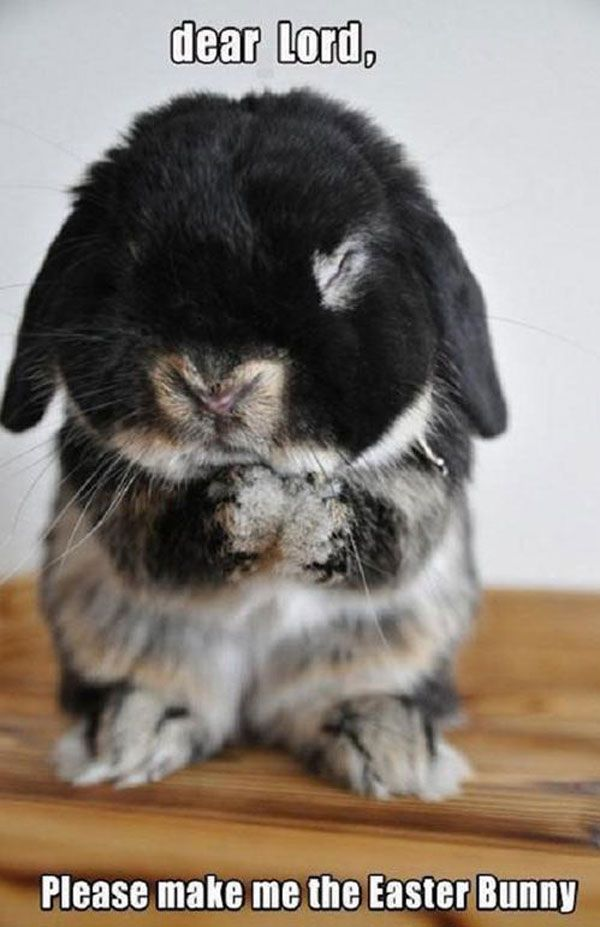 19 Things Every Bunny Lover Understands #funnyanimalpictures