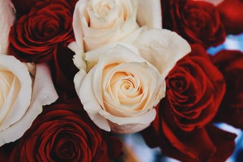اجمل بوكيه ورد طبيعي صور اجمل بوكيه ورد طبيعي جميل Zina Blog How To Preserve Flowers Red And White Roses Preserved Roses