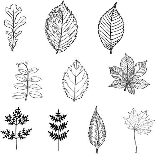 Leaf patterns color free pinterest leaves