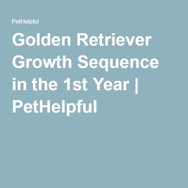 Golden Retriever Growth Sequence In The 1st Year Golden
