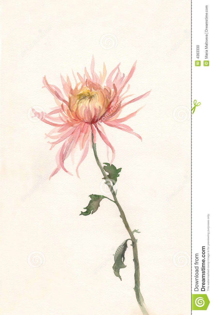 Yellow Pink Chrysanthemum Watercolor Painting Chrysanthemum Watercolor Chrysanthemum Painting Watercolor