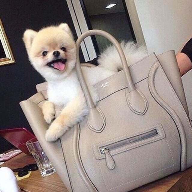 Two Of The Most Perfect Things Grey Celine Luggage Bag And A