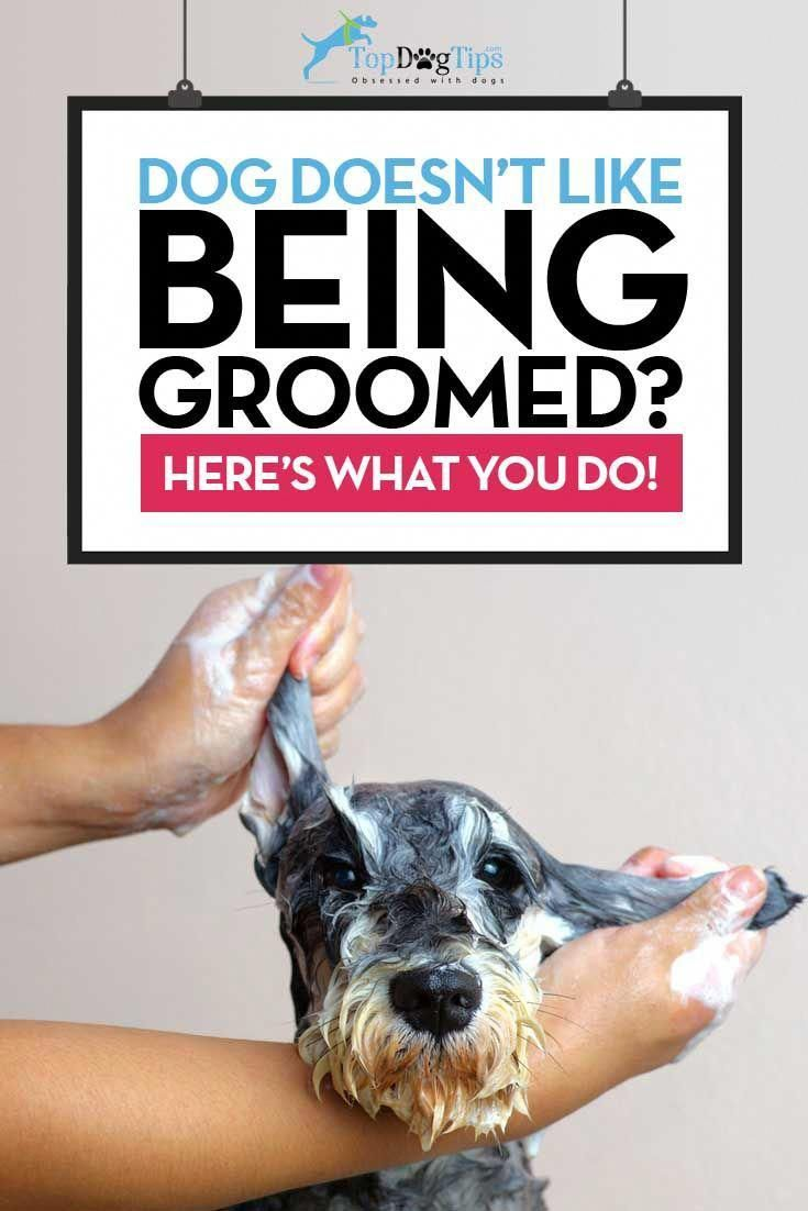 How to train a dog to enjoy grooming and keep him calm