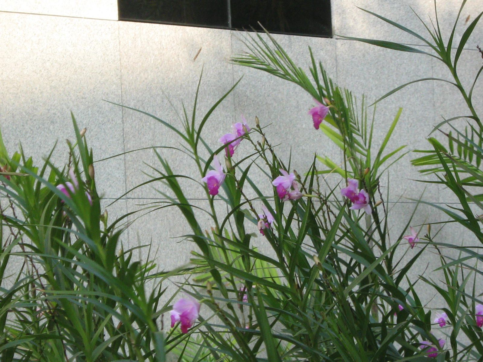 Orquidea bambu sol pleno meia sombra paisagismo pinterest - Plantas pleno sol ...