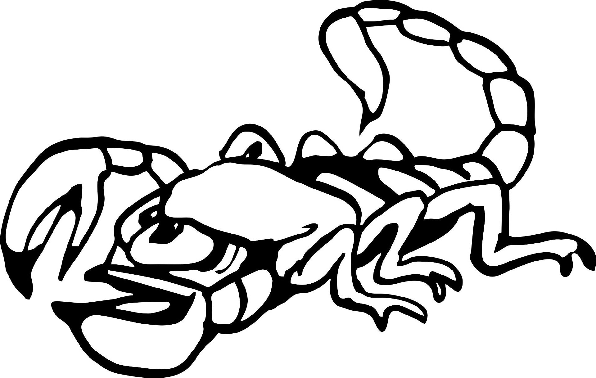 Skorpion   Ausmalbilder tiere, Ausmalbilder, Ausmalen