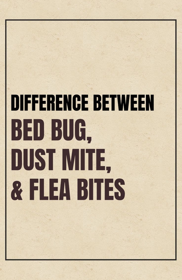 Flea Bites vs Bed Bug Bites vs Dust Mite Bites Bed bug
