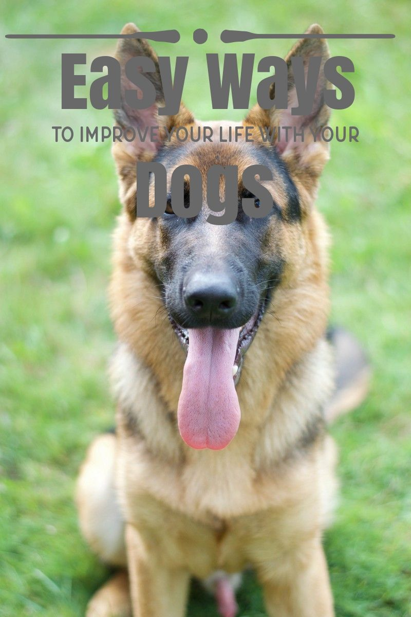Easy ways to improve your life with your dogs happy dogs
