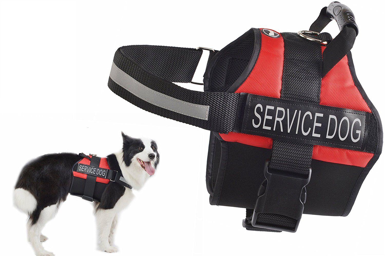 EXPAWLORER Anti Anxiety Stress Relief Service Dog Harness, Training