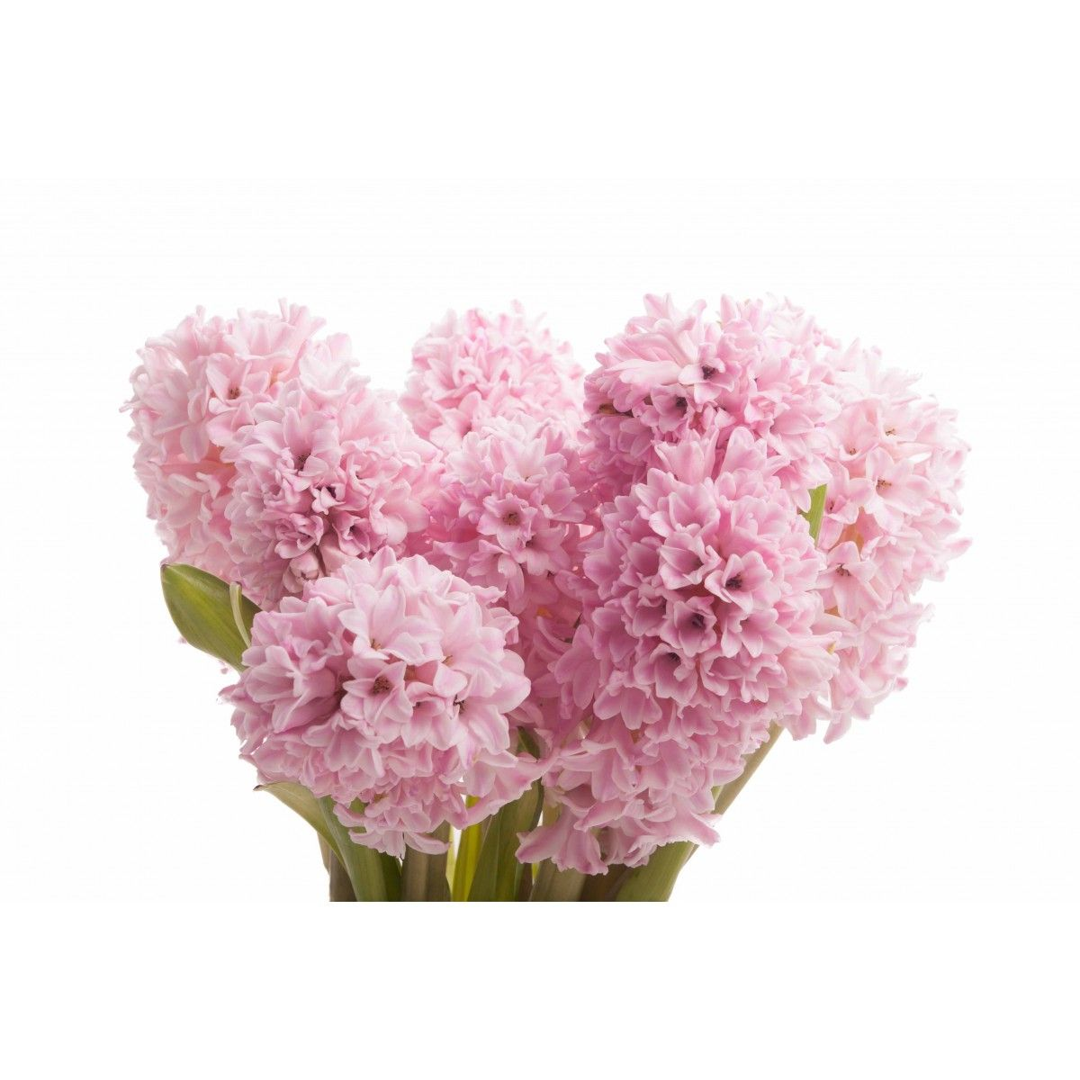 Top 46 Beautiful Pink Flowers For Your Garden Beautiful Flowers
