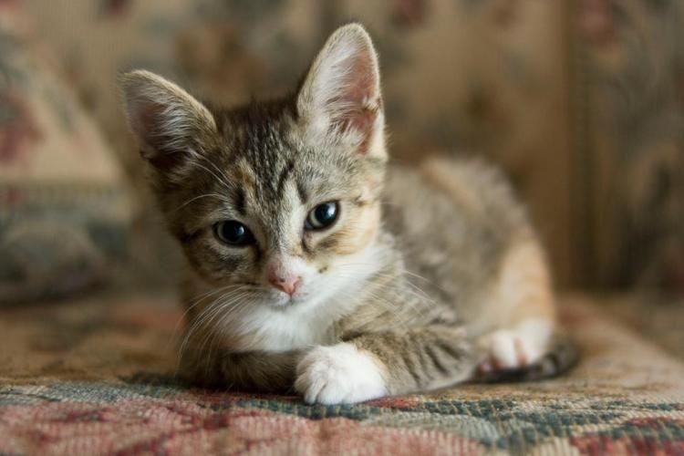 10 Crucial Steps To Take To Save An Abandoned Newborn Kitten Newborn Kittens Kitten Care Baby Kittens