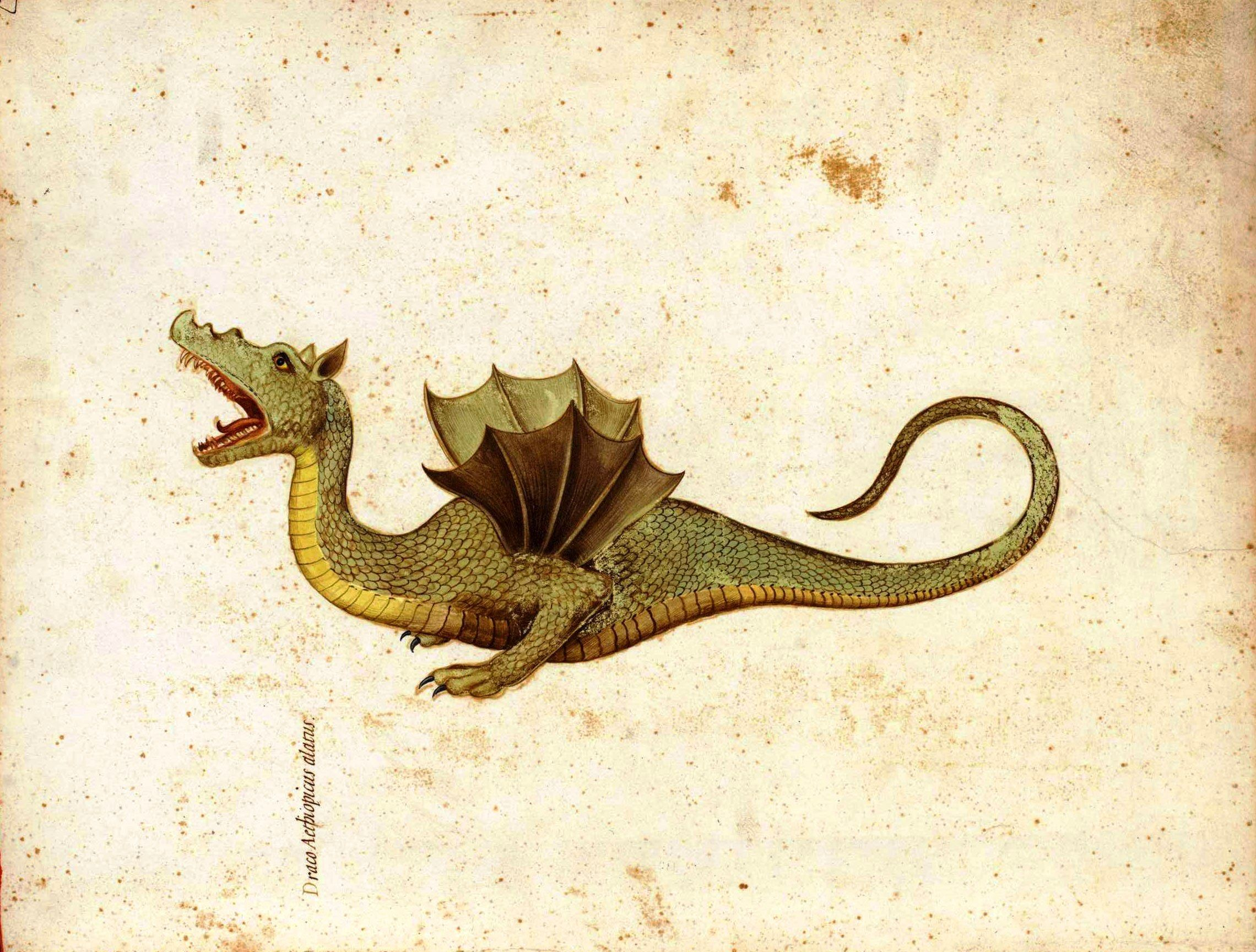 How to breed heraldic dragon - Mediaeval Picture Of A Dragon Draco Aethiopticus Or Ethiopian Dragon