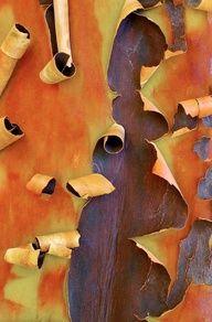 Manzanita #bark #texture