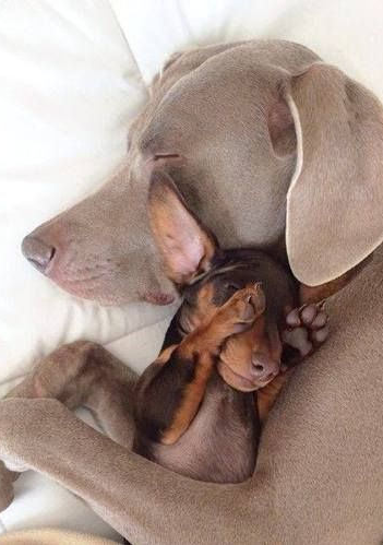 12 Dogs Who Have Mastered The Art Of Cuddling With Images Cute Animals Cute Dogs Animals