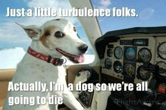 Silly dog. You can't fly a plane   # Pinterest++ for iPad #