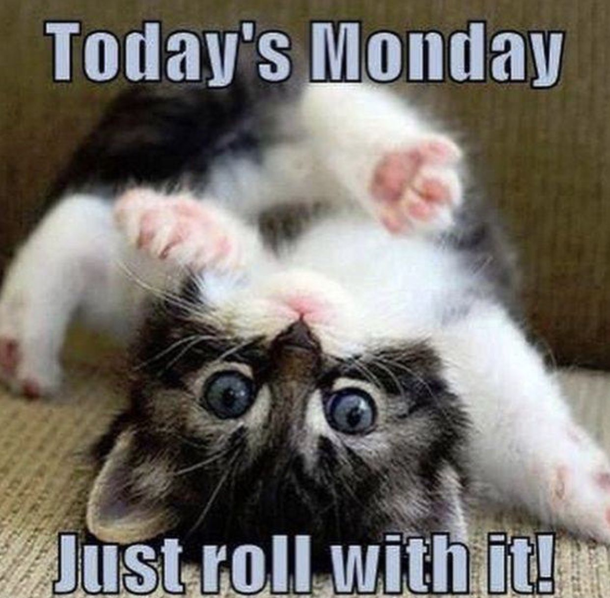 I'll roll with it right back to bed!   Good morning funny, Monday humor, Morning humor