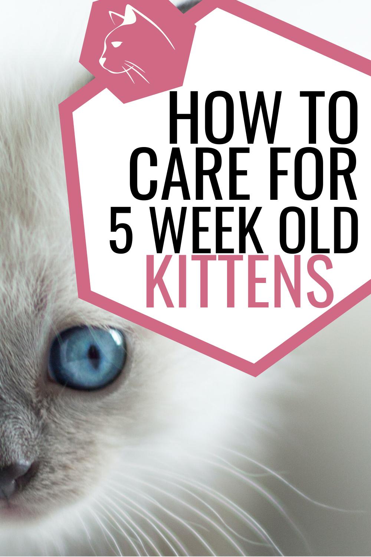 Wet Kitten Food Chart Feeding Kittens Cat Care Kitten Care