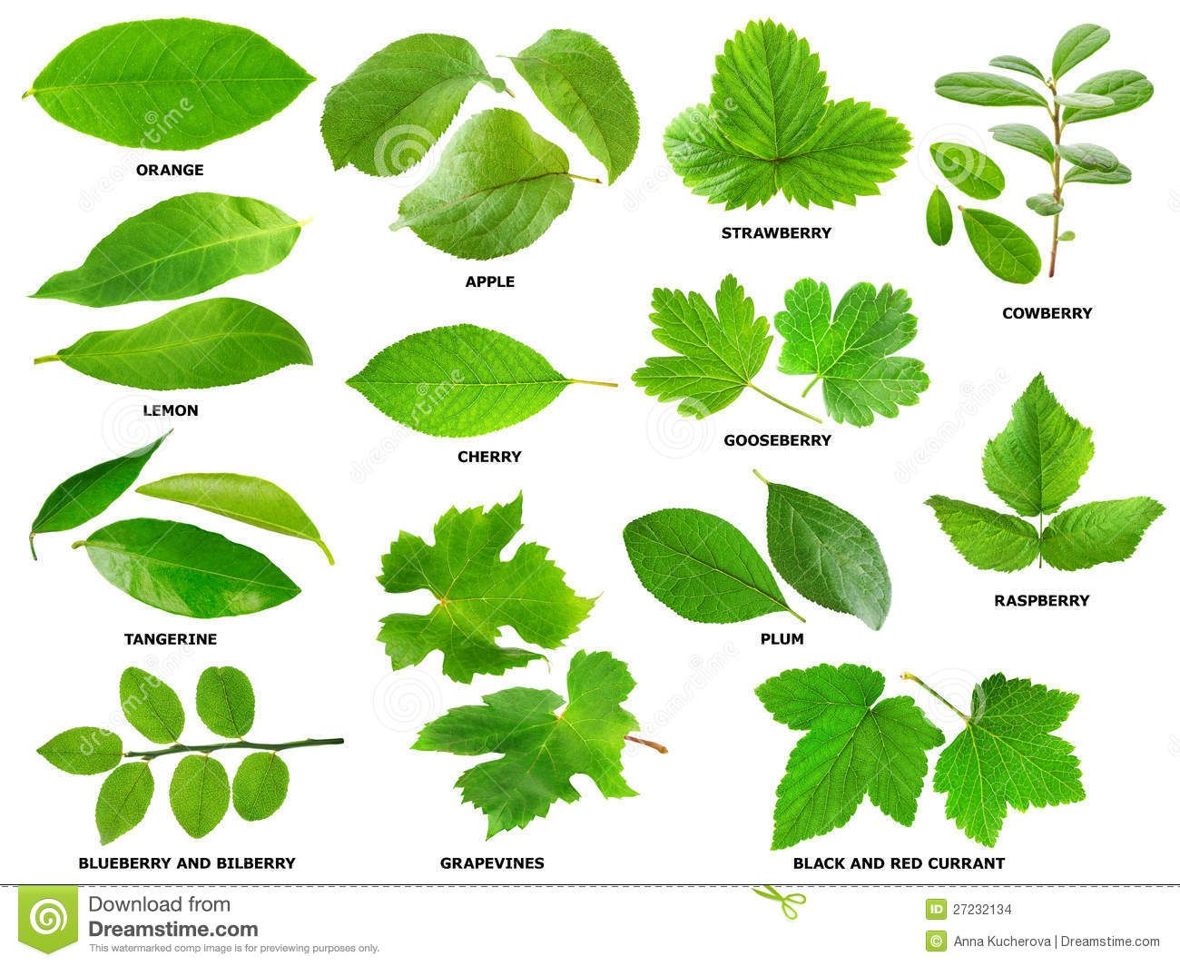 Leaves Of Fruit Berry Shrubs And Trees Leaves Shrubs Plant Leaves