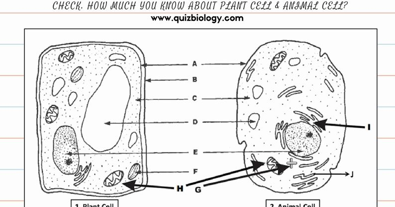Animal And Plant Cell Printable Life Science Middle School Plant Cells Worksheet Science Cells