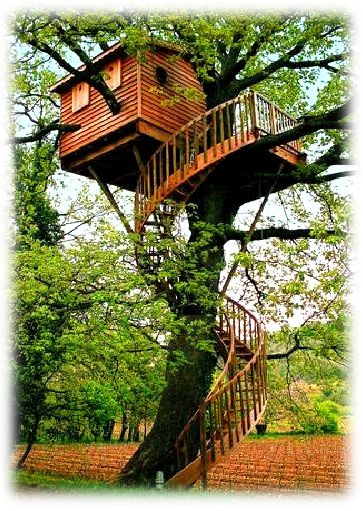 Spiral Wooden Stairs To Tree House In Backyard.