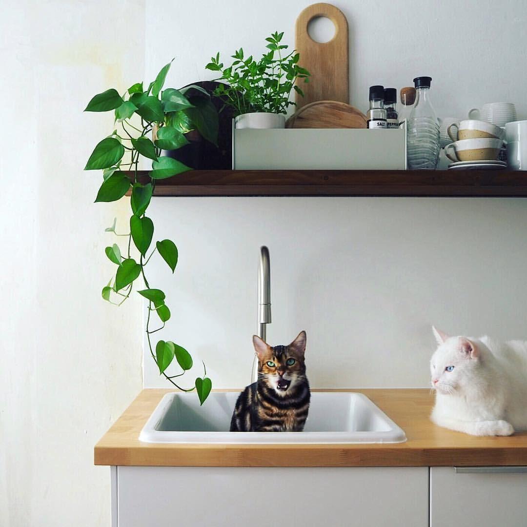 Immer Diese Vorurteile Dass Im Katzenhaushalt Uberall Fell