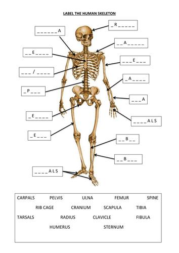3rd ed principles of animal physiology pdf