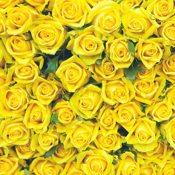 Flower Market Series - Yellow Rose - Photographic print - Spring ...