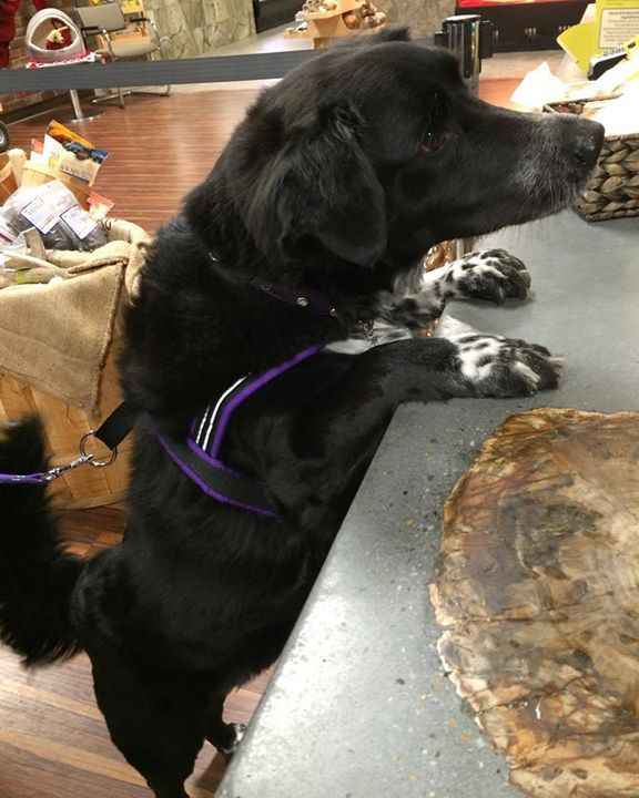 I know you have treats behind the counter! I can smell them! #lehighvalley #allentown #healthypets #petlovers