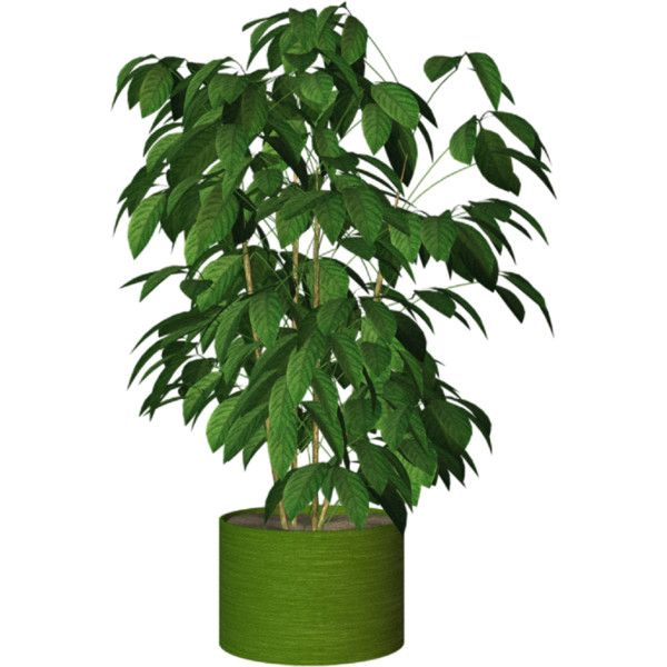Potted plants indoor plants 11 png liked on polyvore - Indoor potted flowers ...