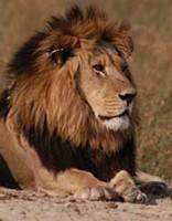 Africa's Most Dangerous Animals - Africa's Deadliest Animals