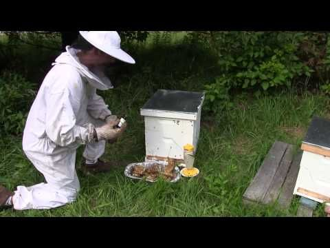 using lemongrass oil when beekeeping youtube urban hobby using lemongrass oil when beekeeping youtube sciox Choice Image