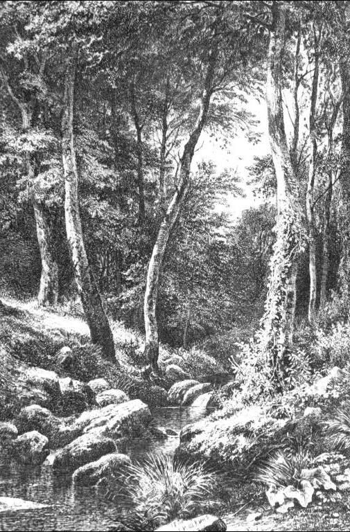 brook in forest ivan ivanovich shishkin 1870 dessins pinterest drawings landscaping and sketches