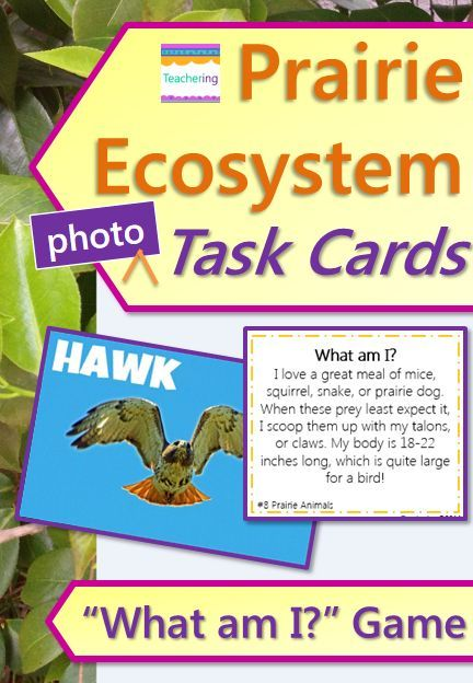 prairie ecosystem task cards and vocabulary photo match match what am i clues