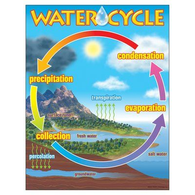 Trend enterprises the water cycle chart also poster project my boys  projects pinterest cycling rh