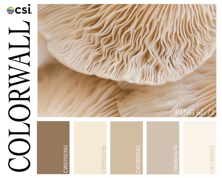 Neutral Beige Taupe Color Color Palette Spectrum Color Spectrum Chromatic Palettes House Colors Colours That Go Together Color