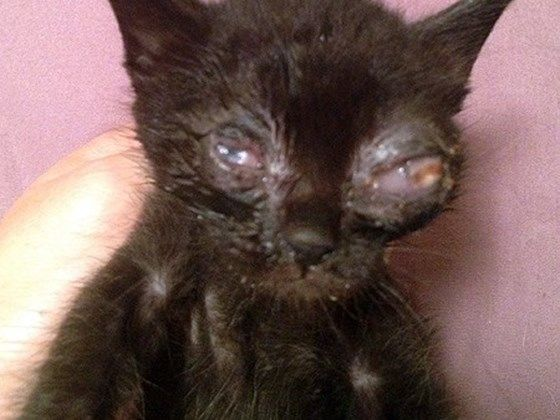 Treating a Kitten with Eye Discharge ThriftyFun