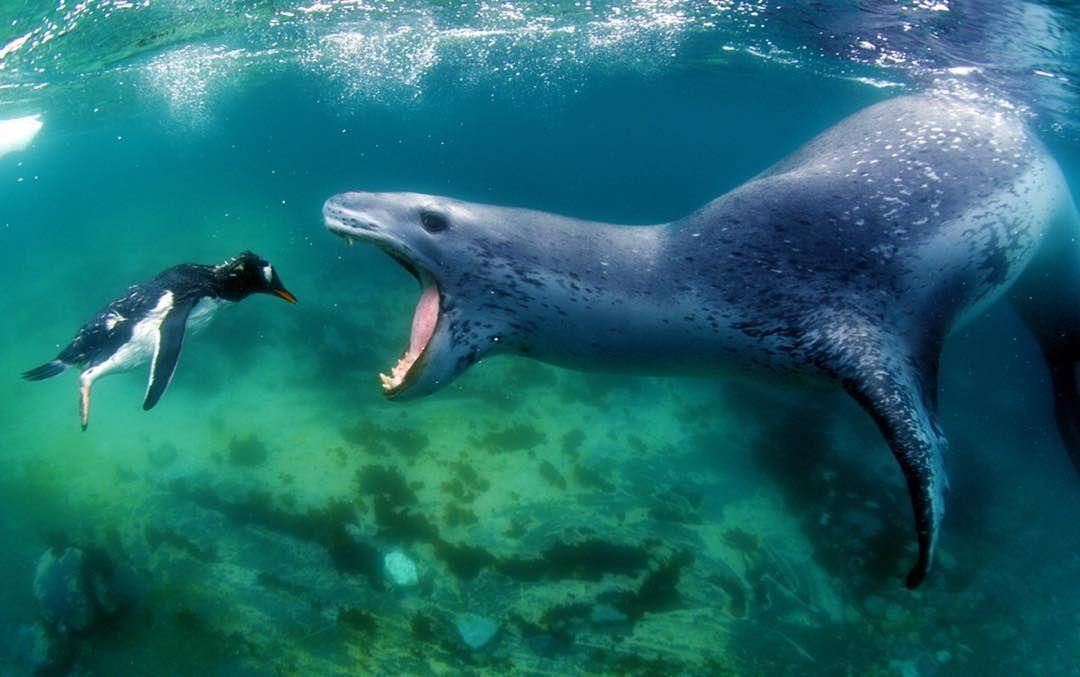 majiedqasem \ - marine biologist job description