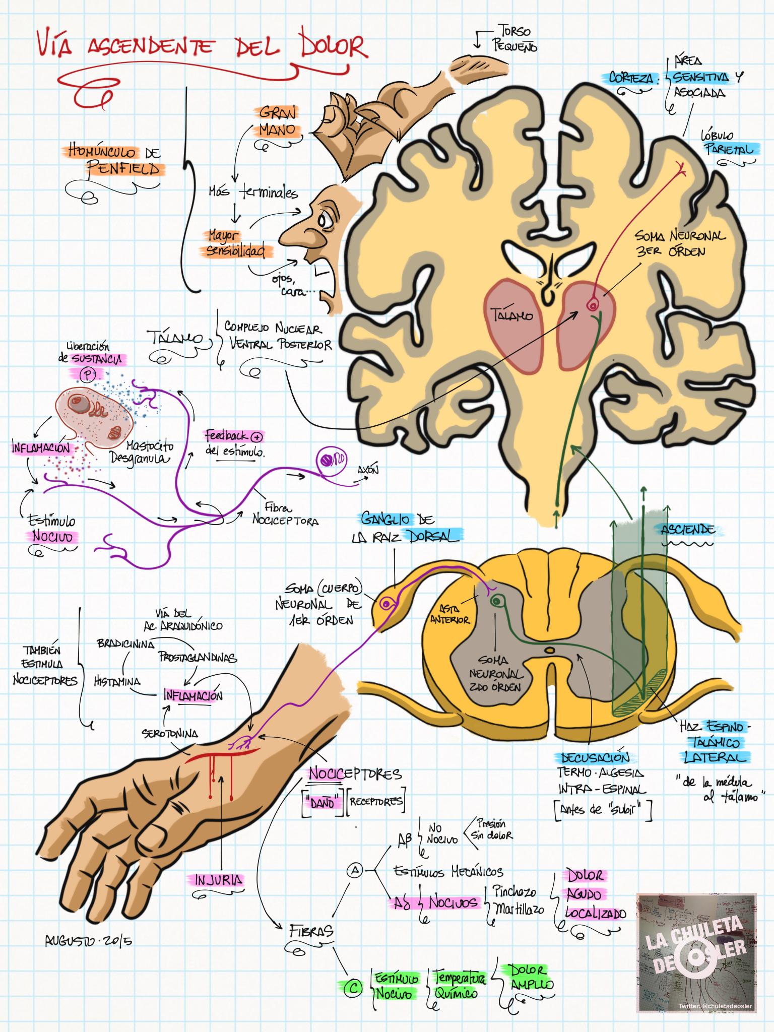 Pin von luis enrique auf Neurológia | Pinterest | Medizin