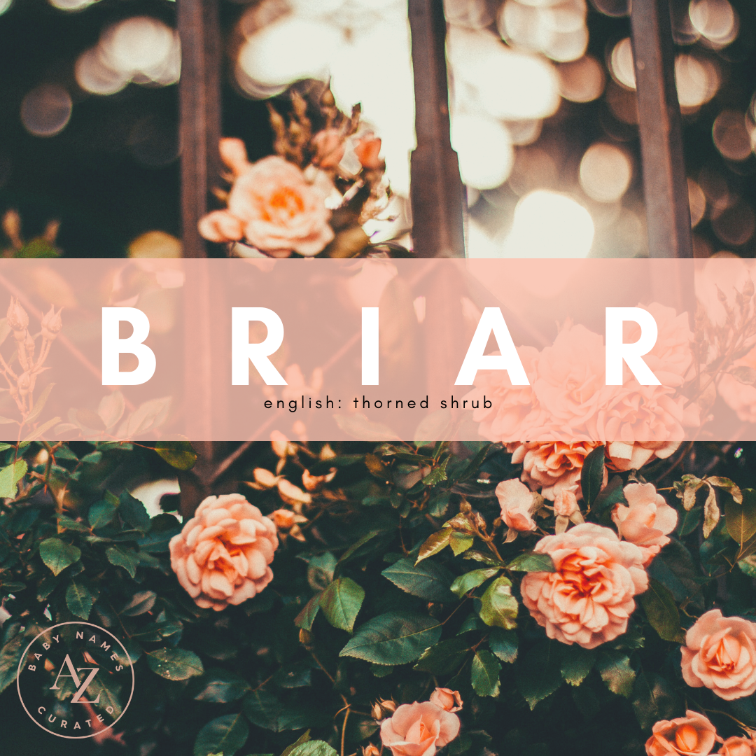 Best of... Botanical Baby Names | Baby names, Baby girl ...