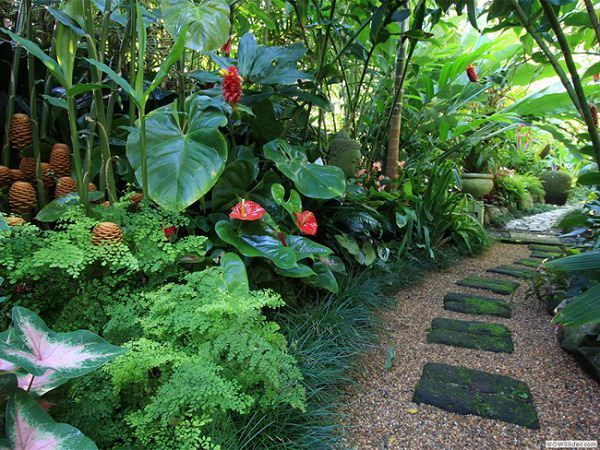 14 Tropical Plants To Create A Tropical Garden In Cold Climate Tropical Landscape Design Tropical Garden Design Tropical Backyard