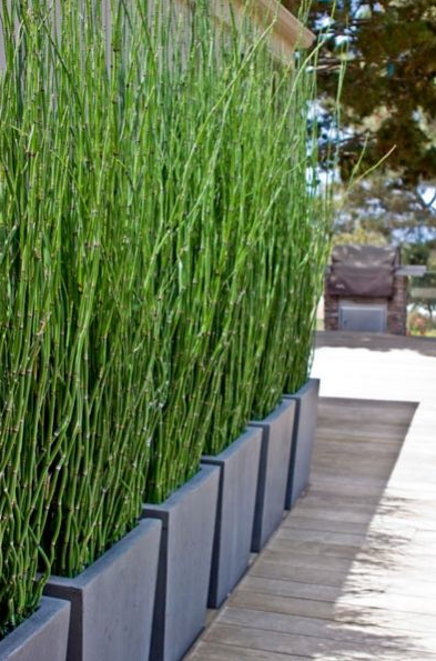 Groen terras | fence ideas | Pinterest