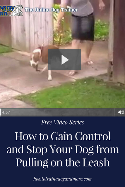 How To Gain Control And Stop Your Dog From Pulling On The Leash