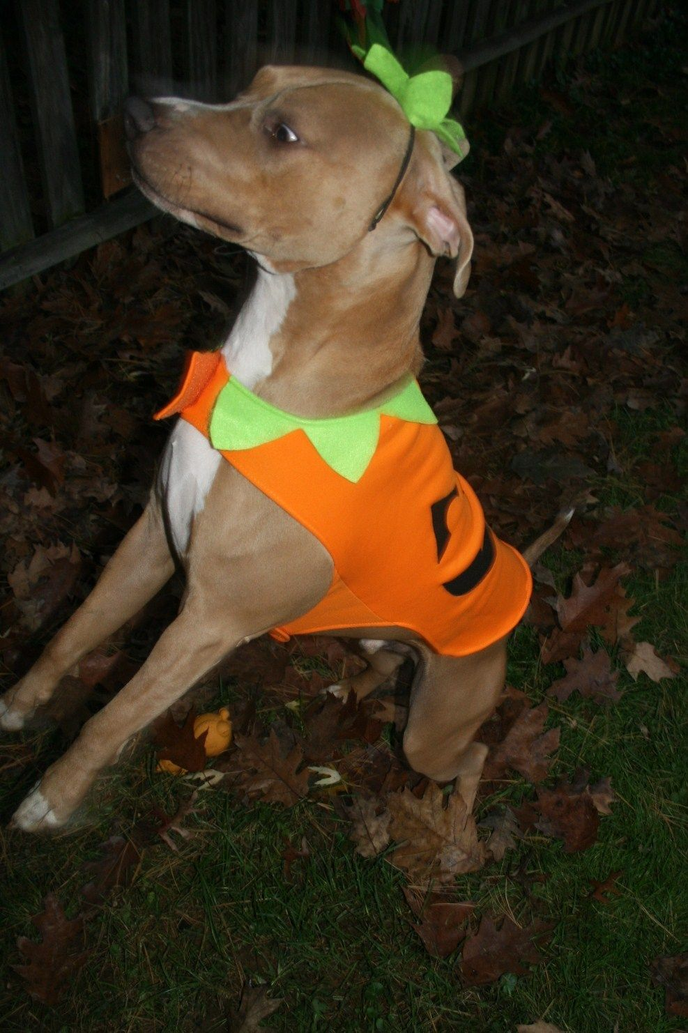 Announcing Our New Pets Category + Halloween Pet Costume