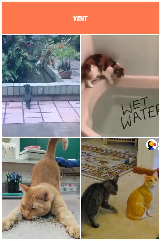funny kitty cats  cat videos funny cats Video funny kitty cats