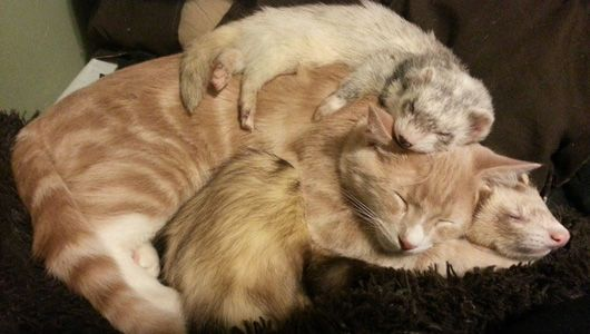 Ned the kitten's owner worried that the feline would have trouble in a ferret household, but instead they became best buds for life.