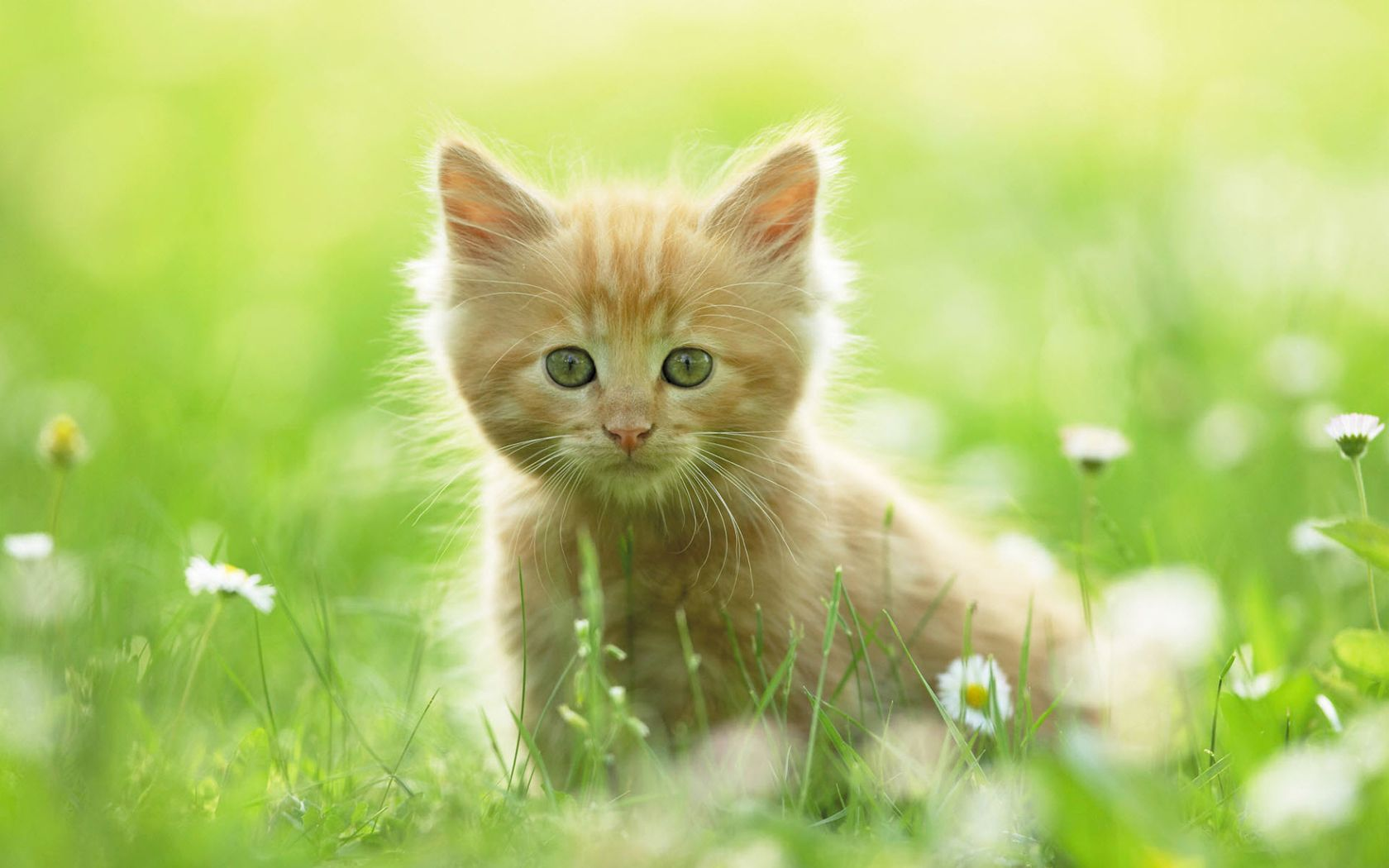Eyes That Never Blink In A Staring Competition Kittens Cutest Baby Animals Cats Kittens