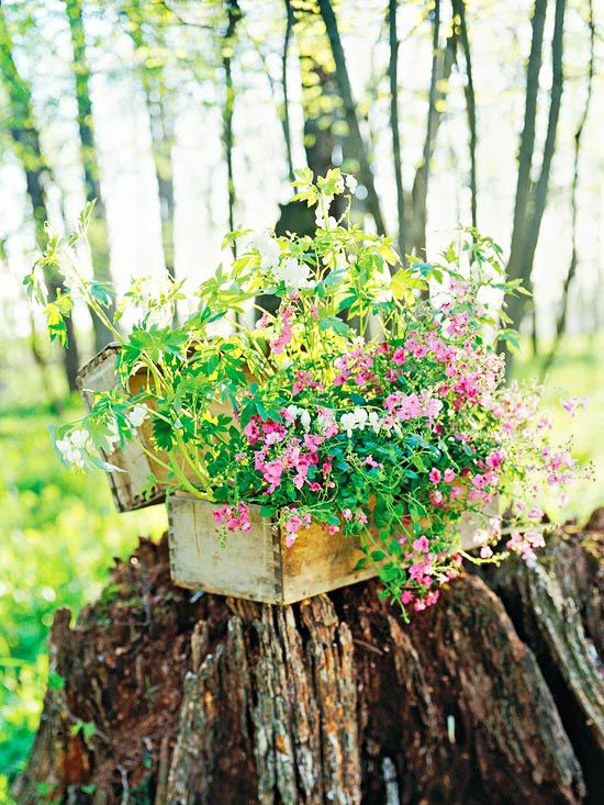 Gorgeous Spring Container Gardens Container Plants Container Flowers Container Gardening